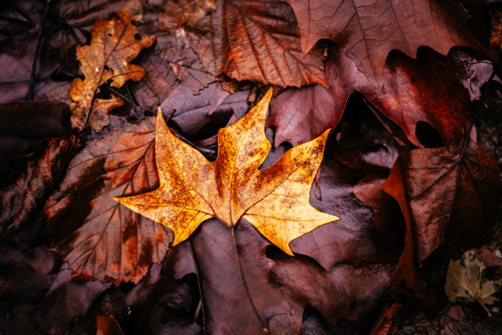 Hojas mojadas de otoño